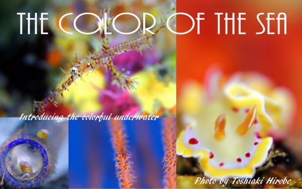 海の中の色